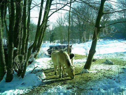 Pferdeüberwachung 1