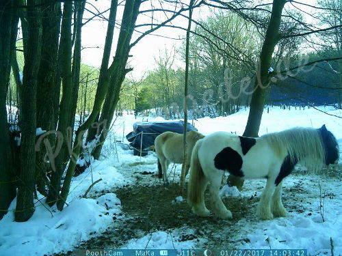 Pferdeüberwachung 2