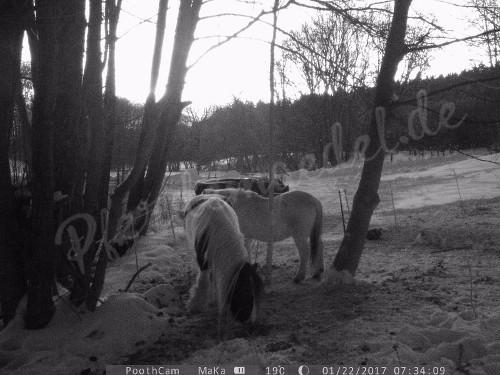Pferdeüberwachung 3