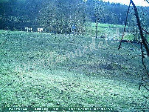 Pferdeüberwachung 4