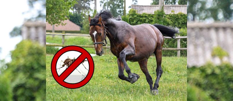 Kriebelmücken bekämpfen - So schützt ihr euer Pferd - Pferdemaedel